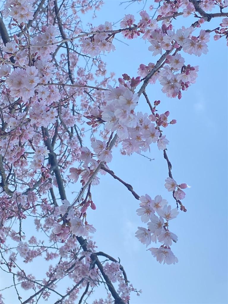 f:id:Kyotani:20210327210834j:image