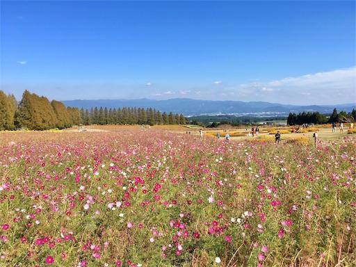 f:id:Kyushu-Tetsutabi:20190112192941j:image