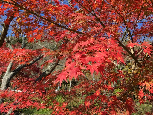 f:id:Kyushu-Tetsutabi:20190112193003j:image