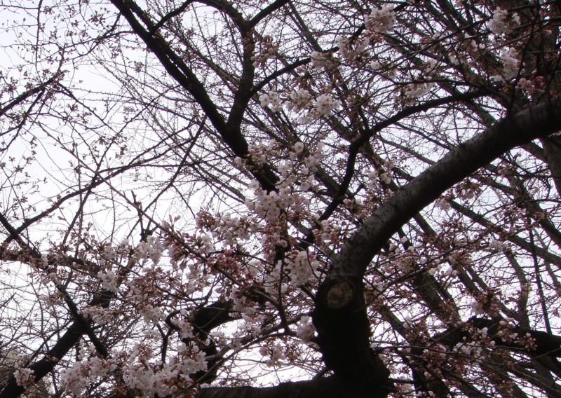 f:id:L-Komachi:20100323080519j:image:w300