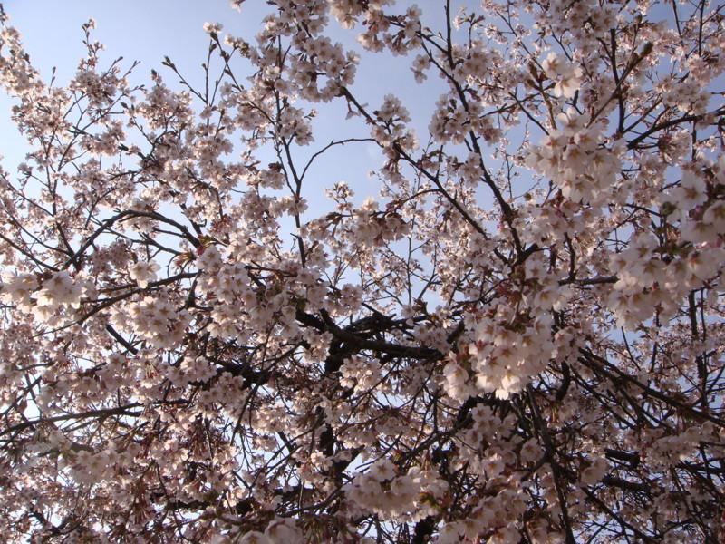 f:id:L-Komachi:20100501161900j:image:w250