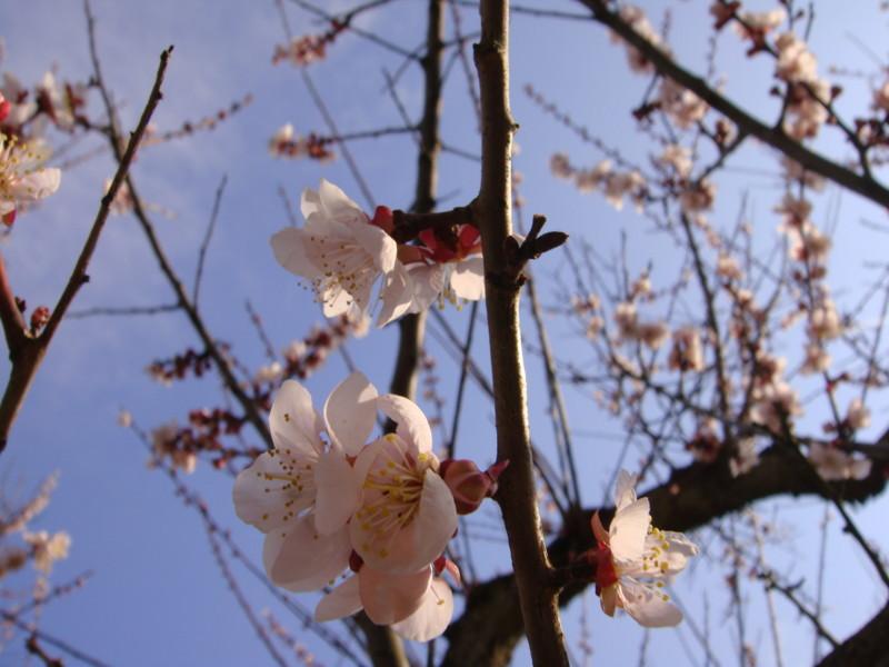 f:id:L-Komachi:20100501162010j:image:w250