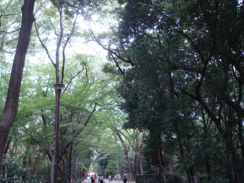 f:id:L-Komachi:20110925104727j:image:w250
