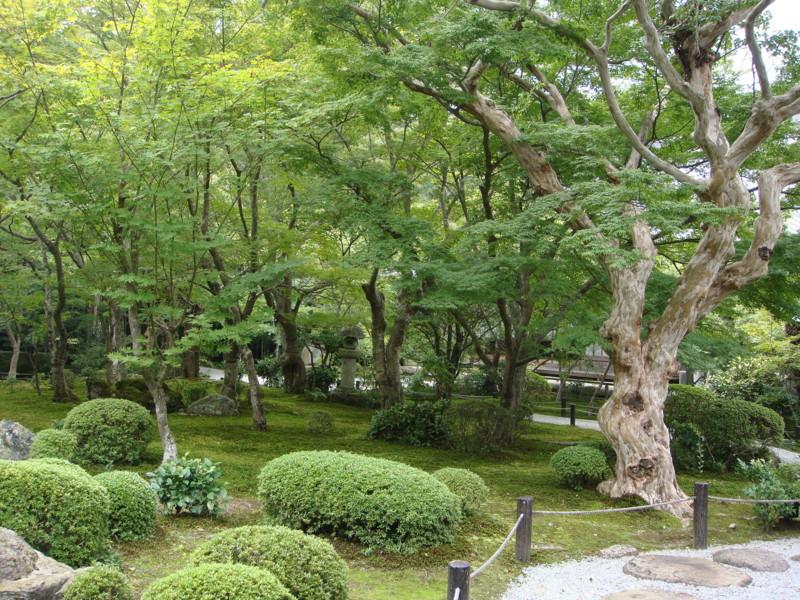 f:id:L-Komachi:20110925125222j:image:w250