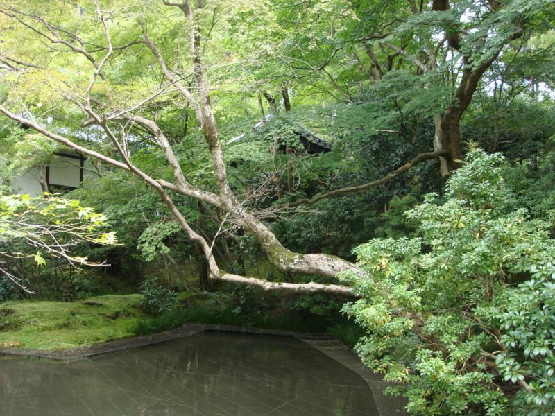 f:id:L-Komachi:20110925130603j:image:w250