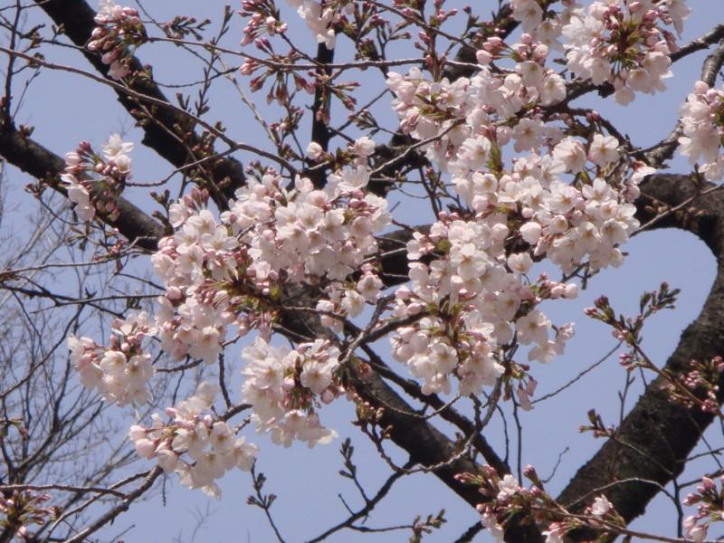 f:id:L-Komachi:20120402123833j:image:w250