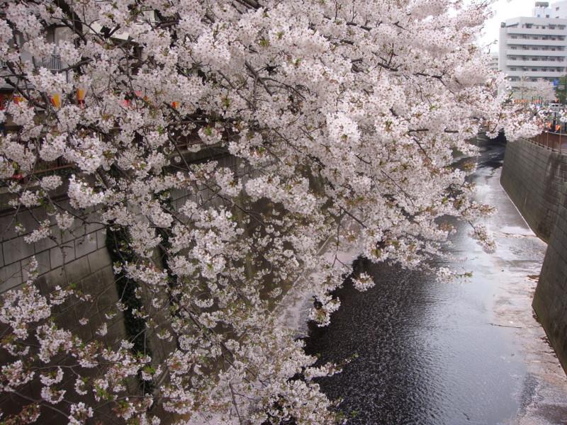 f:id:L-Komachi:20120411112235j:image:w250