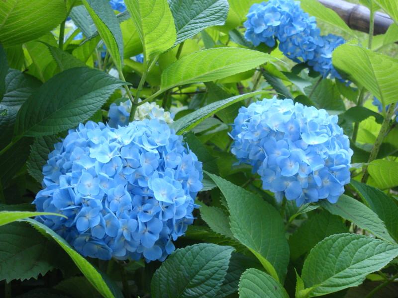 f:id:L-Komachi:20120530080211j:image:w250