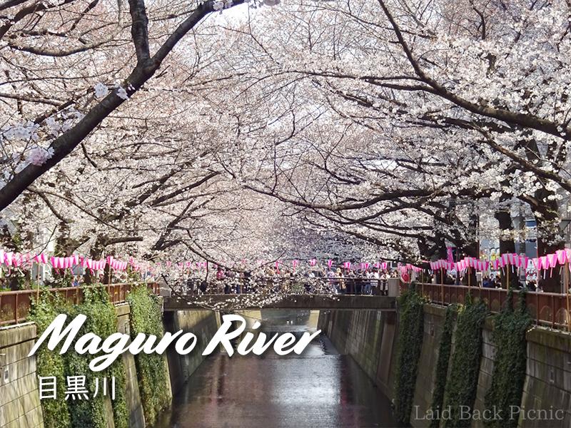 目黒川を覆うように咲く桜並木