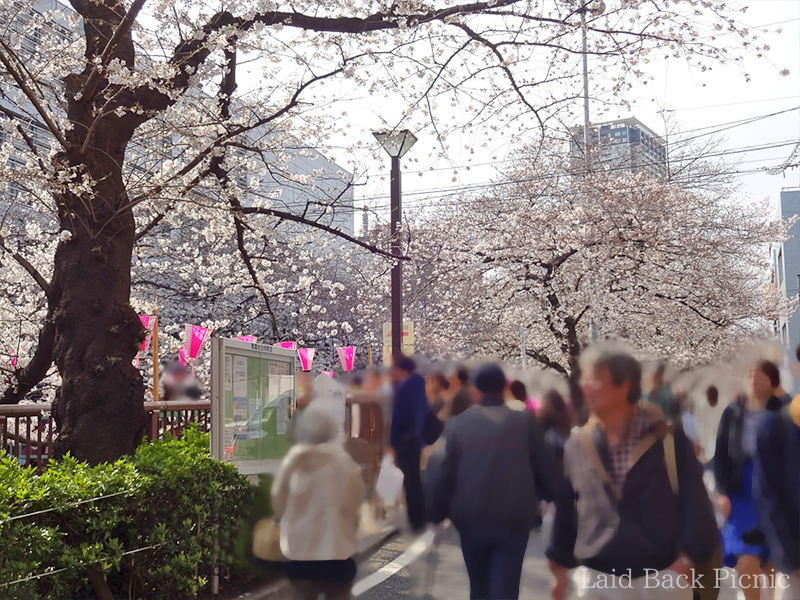 It's the best time to look at the cherry blossoms
