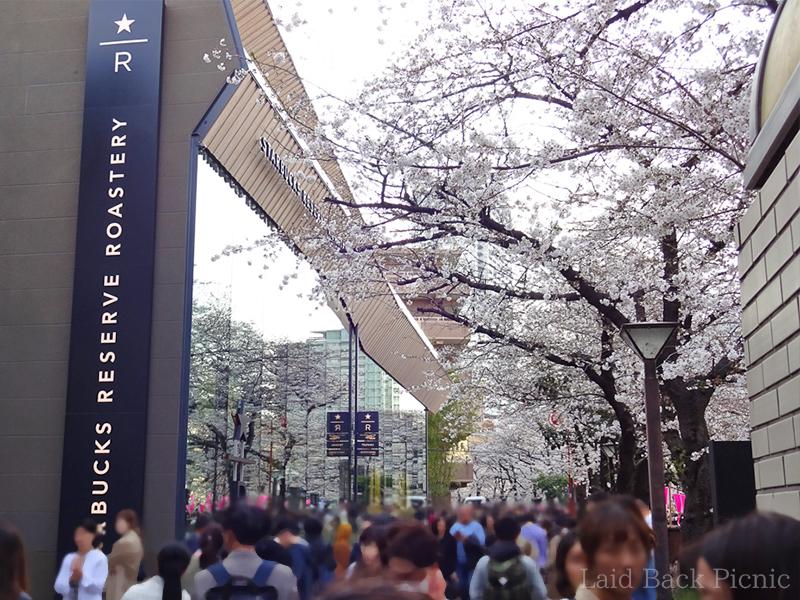 ガラス張りの店舗からも目黒川沿いの桜が見える
