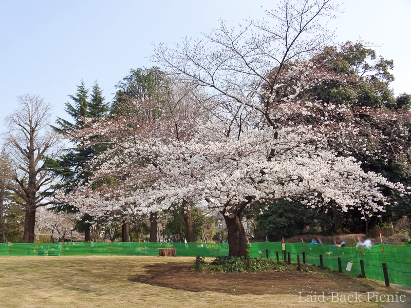There are few trees but you can enjoy cherry blossoms