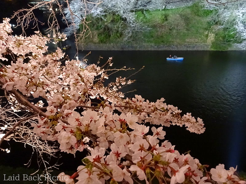 The contrast between the brightness of cherry blossoms and the darkness of moat is beautiful