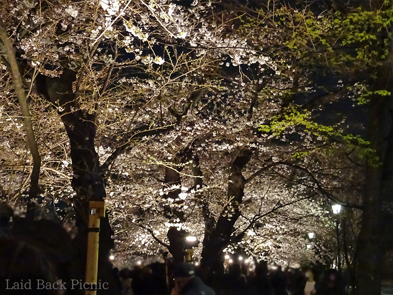 It is the first day of the Sakura Festival, there will be more people from the next day.