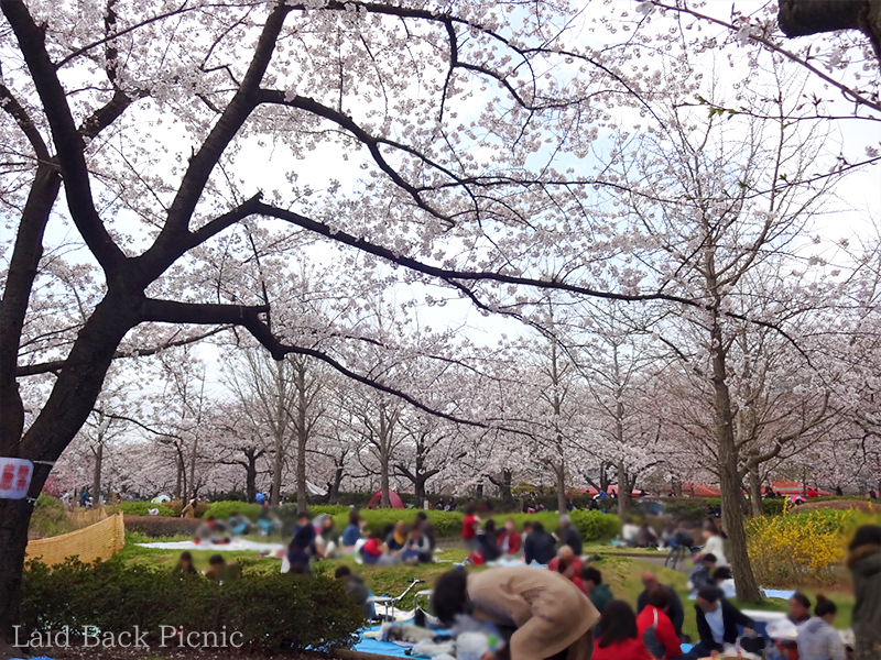 This park is recommended for Hanami