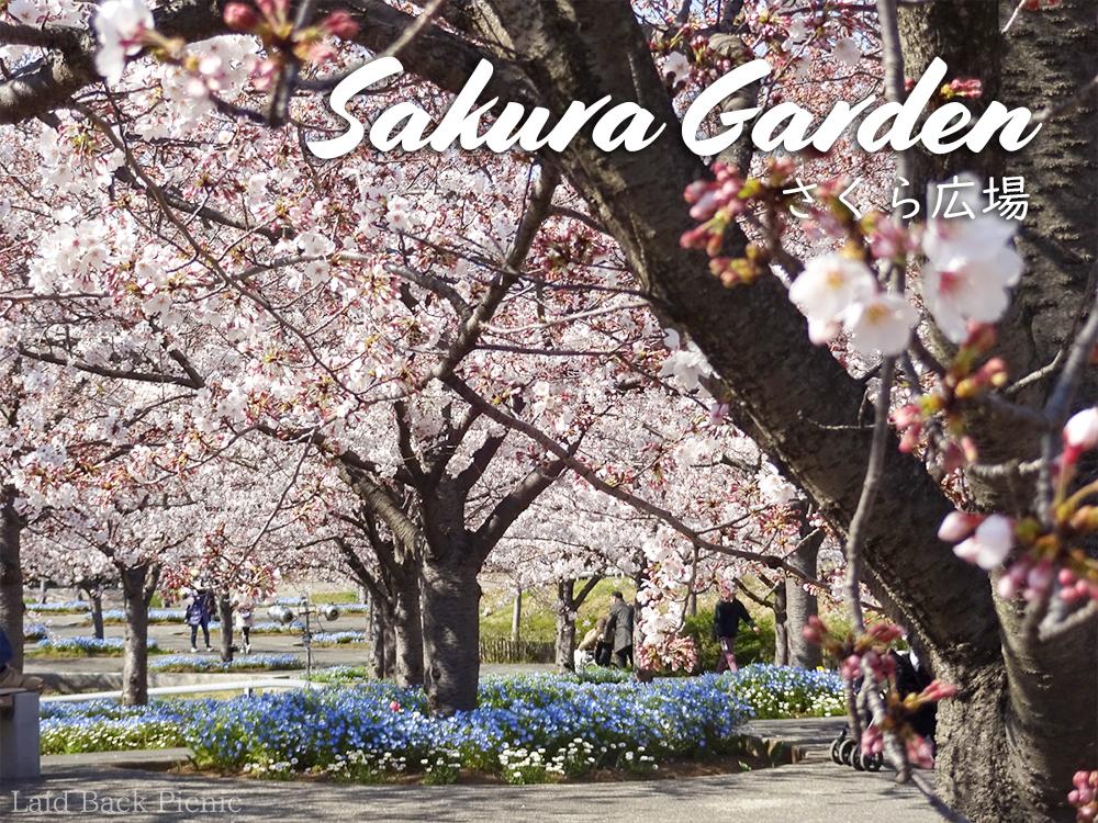 奥まで続く桜の木と、その根元にはネモフィラが咲く