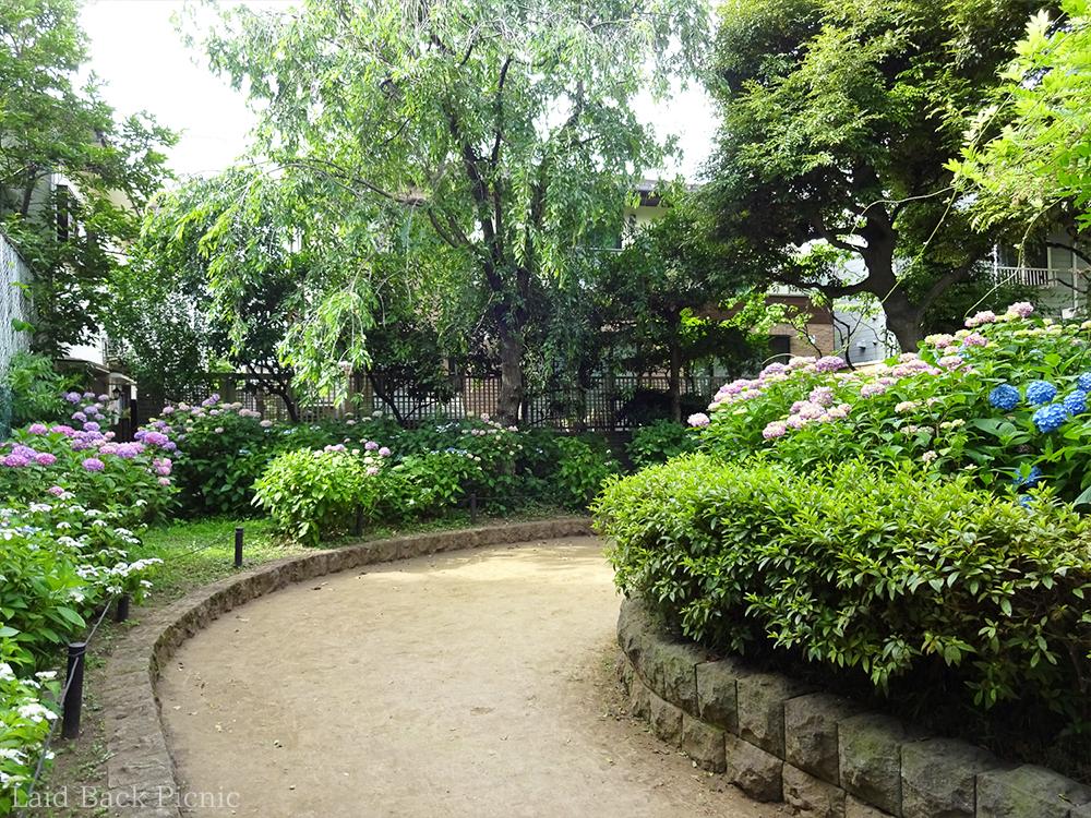公園の方が紫陽花の開花は進んでいる