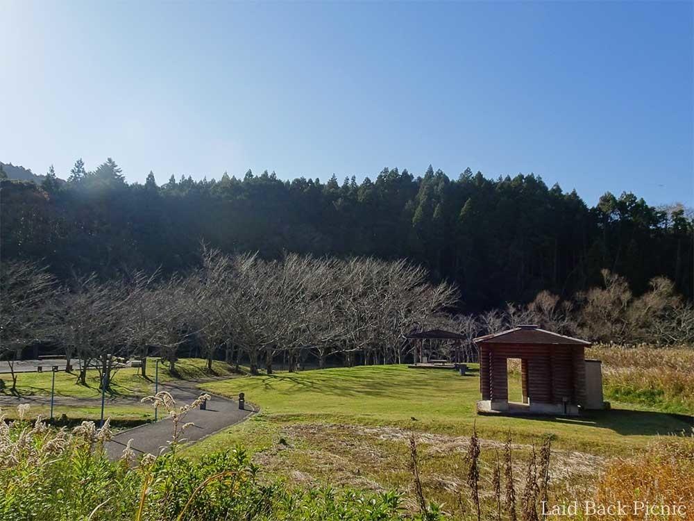 公園の全景、桜並木