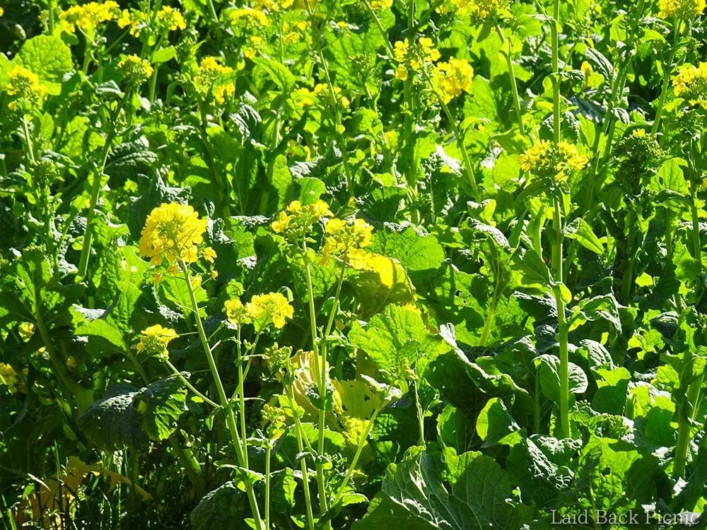 黄色い花が鮮やか