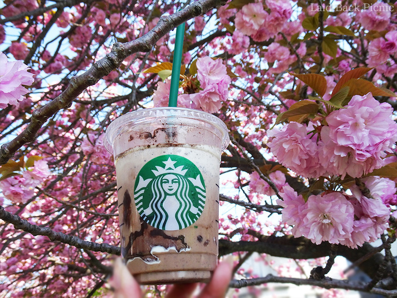 八重桜をバックにフラペチーノを楽しむ