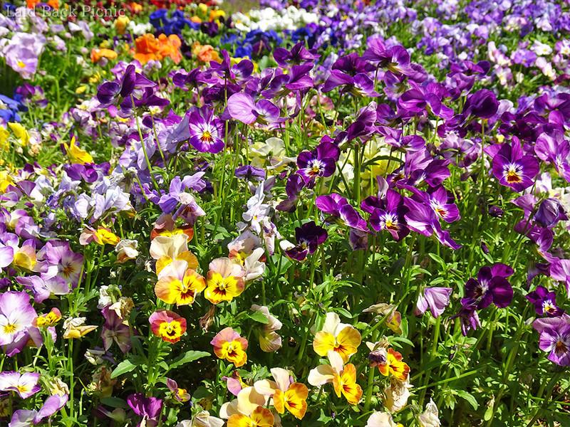 黄色や紫、オレンジなど華やかな花