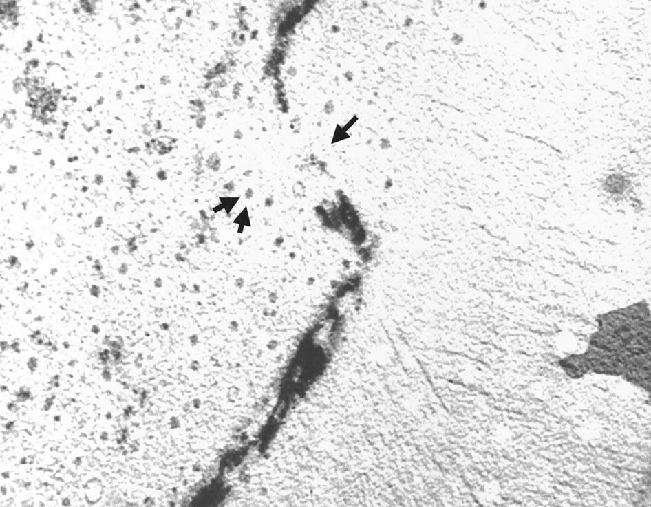 f:id:LM-7:20100214224744j:image:w200
