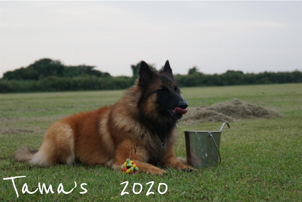 f:id:La-Plume-Douce:20201004192546j:image