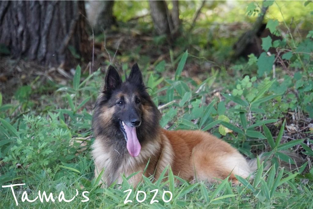 f:id:La-Plume-Douce:20201004192555j:image