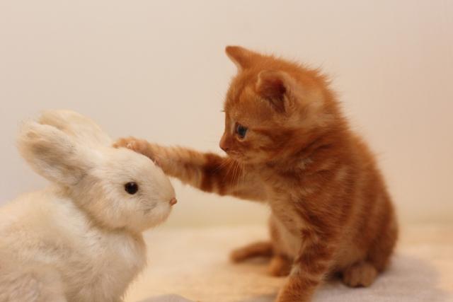 うさぎをほめる子猫