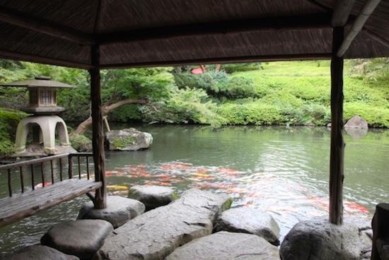 八芳園庭園の水亭から見える池