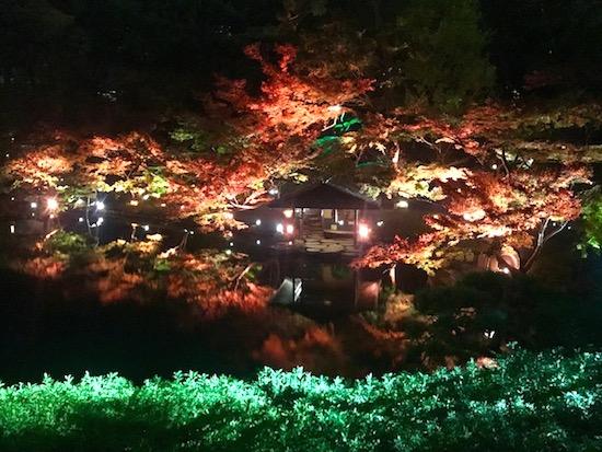 八芳園紅葉のライトアップ