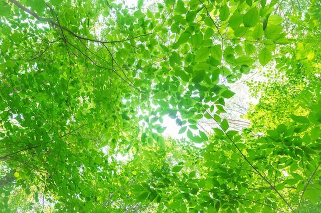 緑の木々と木漏れ日
