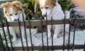 ウェルカムな犬たち。