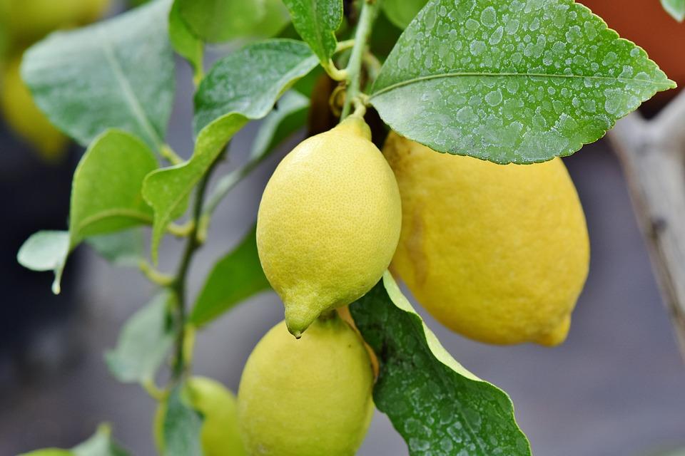 f:id:LemonTrees:20190210102731j:plain