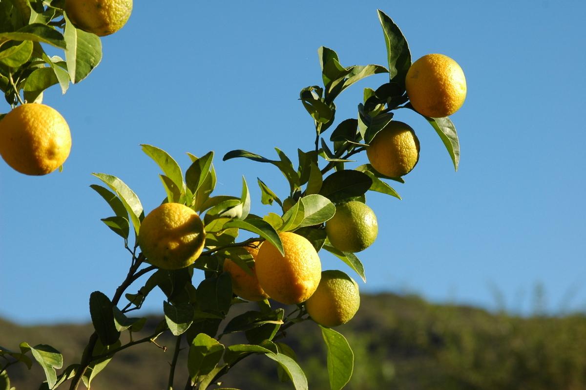 f:id:LemonTrees:20191230145524j:plain