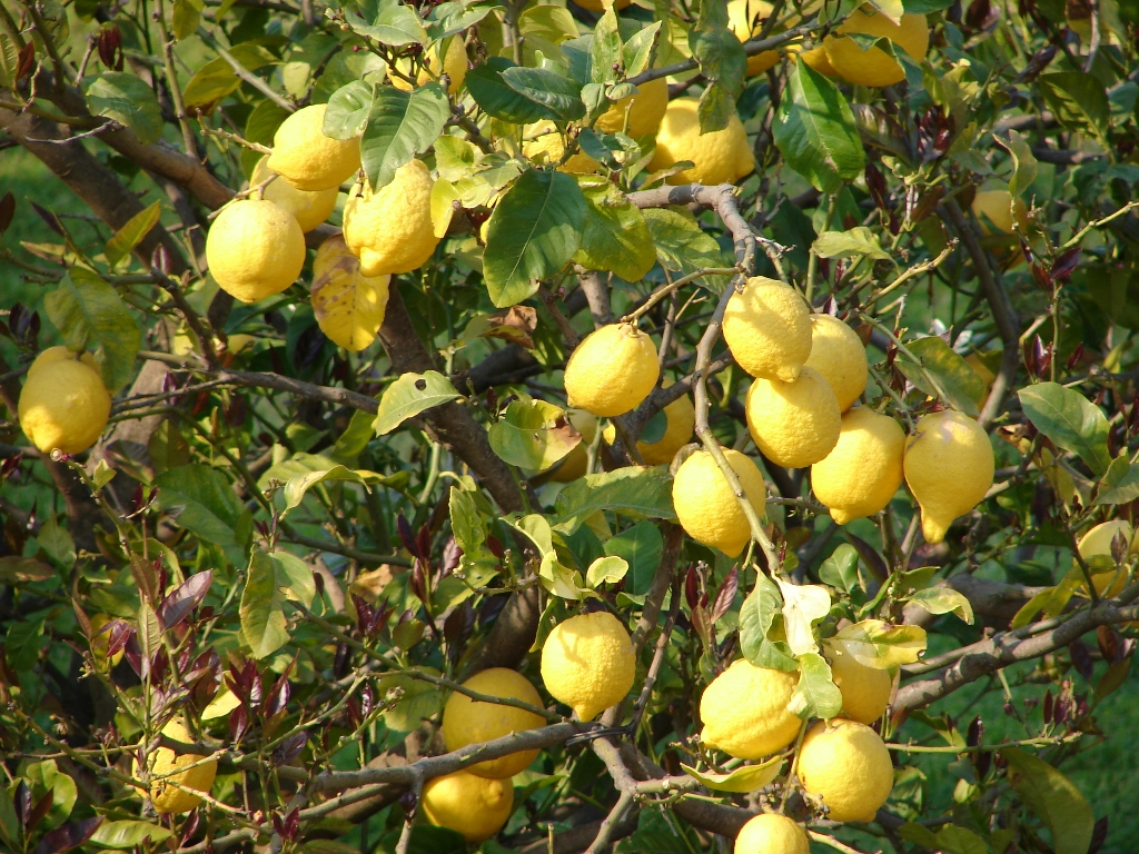 f:id:LemonTrees:20200129173332j:plain