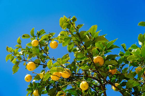 f:id:LemonTrees:20200331135503p:plain