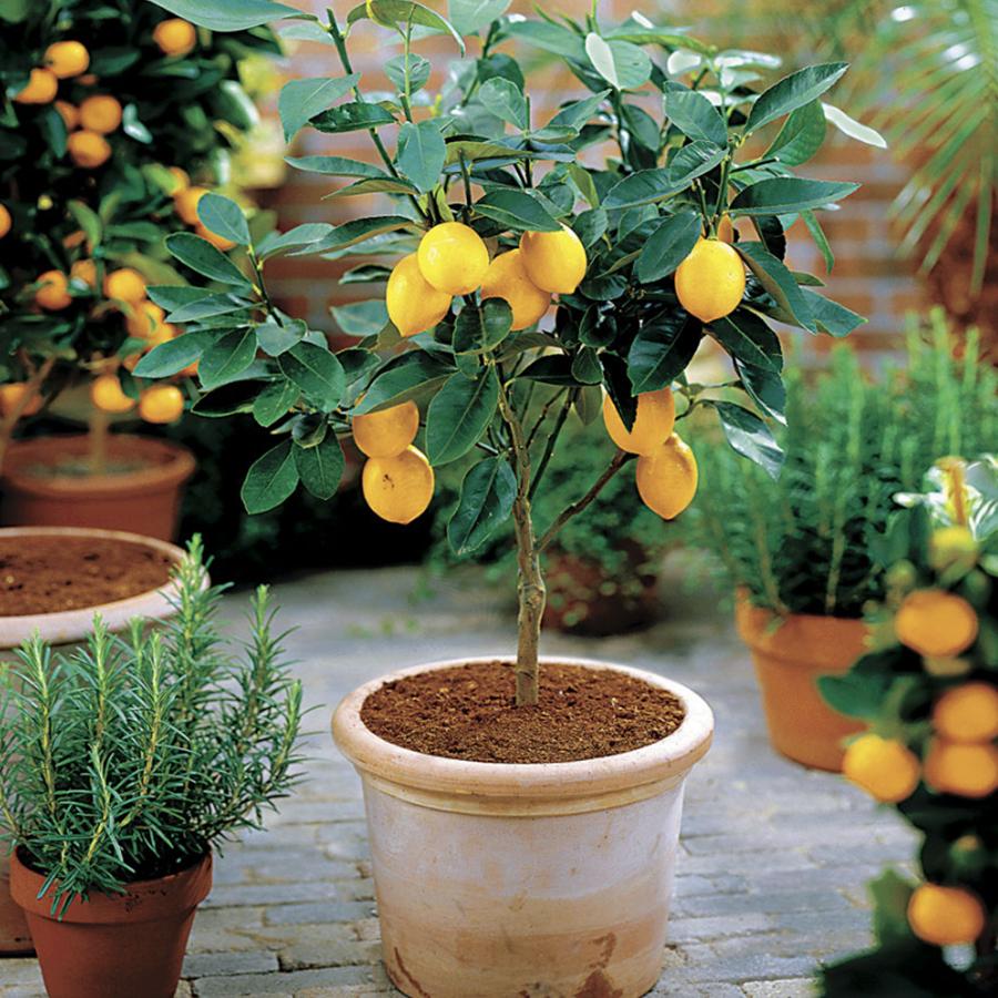 f:id:LemonTrees:20200502190309j:plain