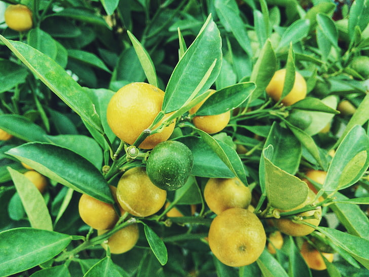 f:id:LemonTrees:20200530172012j:plain