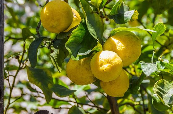 f:id:LemonTrees:20200629184513p:plain