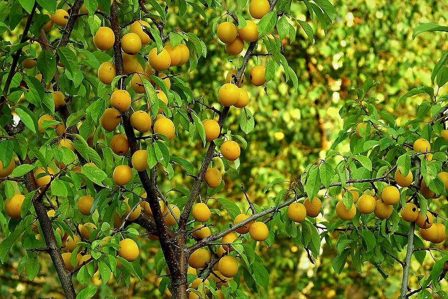 f:id:LemonTrees:20200729182848j:plain