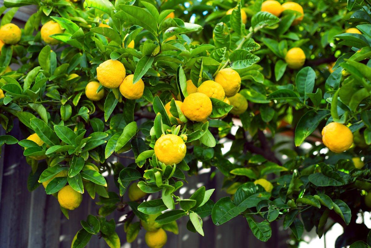 f:id:LemonTrees:20200903191000j:plain