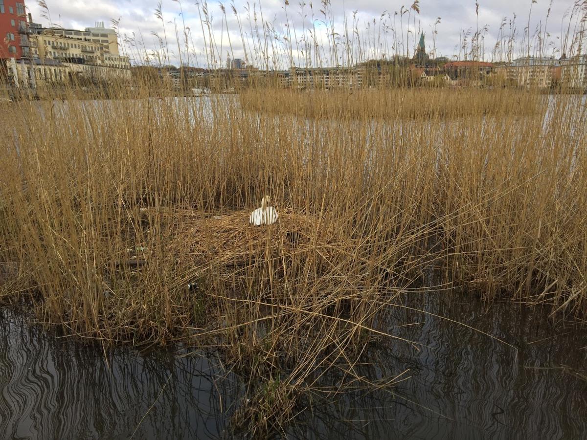 f:id:Lifeinsweden:20210507154444p:plain