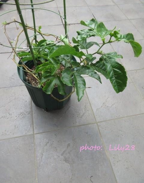 f:id:Lily28:20210714205406j:plain