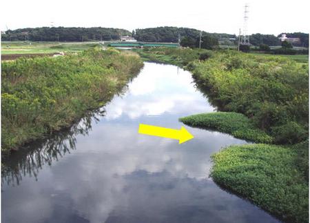 2007-10-19 - Limnology 水から...