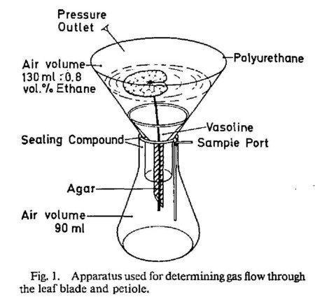 f:id:Limnology:20110118141734j:image