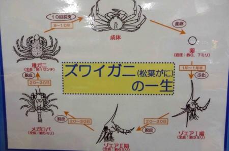 f:id:Limnology:20110806151943j:image