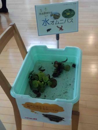 f:id:Limnology:20121027112915j:image