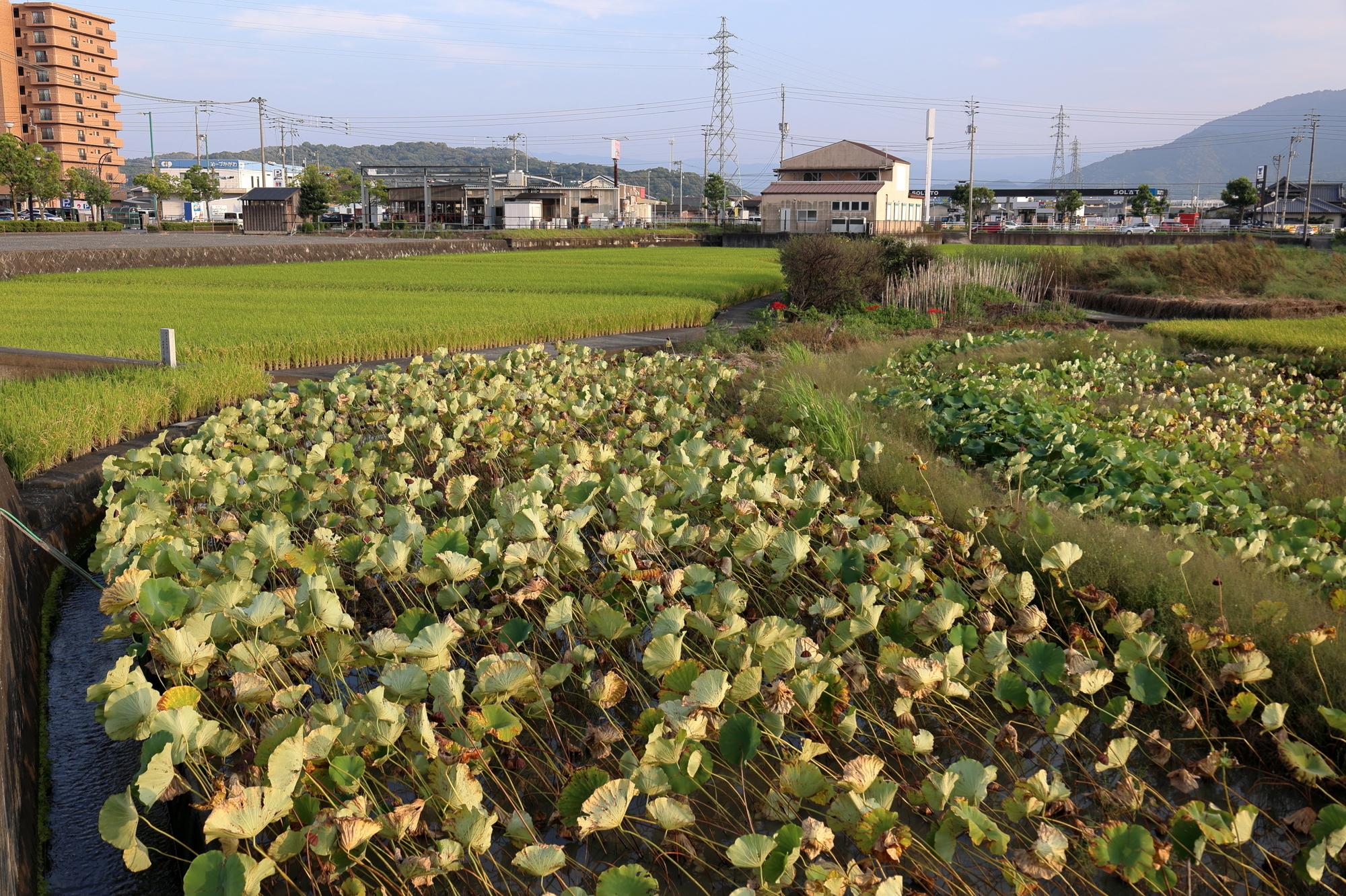 f:id:Logosuke:20210923165719j:plain
