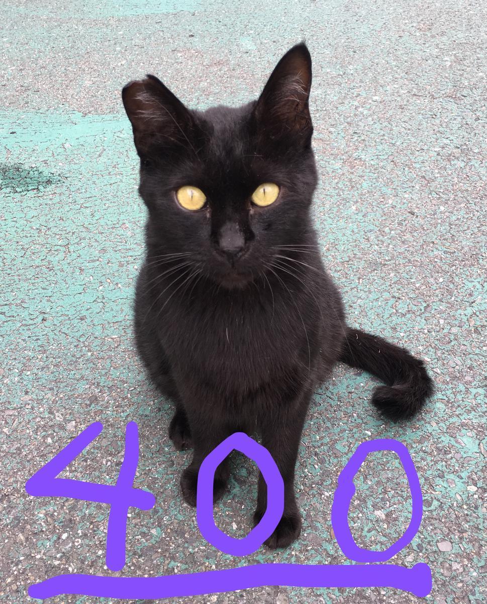 読者数400人を突破!!クロネコの「ルシパ〜 400」